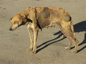 Among the most common symptoms are loss of appetite, cough, and difficulty breathing but not every dog would show signs