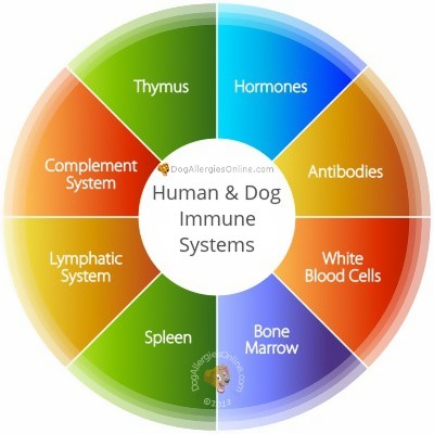 This infection can target dogs and even humans with weakened immune system